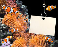 Ψάρια κλόουν και κενό φύλλο ενός εγγράφου για έναν γάντζο αλιείας Στοκ Εικόνα