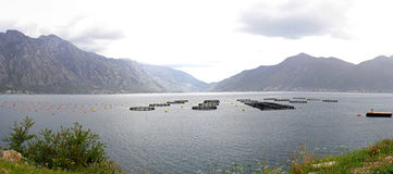 ψάρια Μαυροβούνιο καλλ&iota Στοκ φωτογραφία με δικαίωμα ελεύθερης χρήσης
