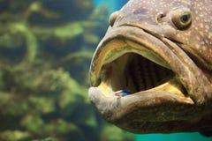 ψάρια μεγάλα Στοκ Εικόνα