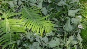 Ψάρια μεταξύ των φύλλων απόθεμα βίντεο