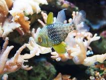 Ψάρια με τα κοράλλια Στοκ φωτογραφίες με δικαίωμα ελεύθερης χρήσης