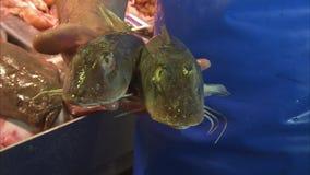 Ψάρια με τα φτερά όπως τα πτερύγια φιλμ μικρού μήκους