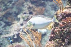 Ψάρια με το βράχο Στοκ εικόνες με δικαίωμα ελεύθερης χρήσης