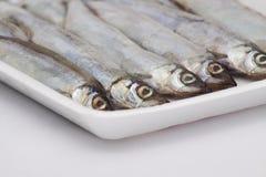 ψάρια παγωμένα Στοκ Φωτογραφίες