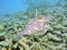 ψάρια παράξενα Στοκ Εικόνες