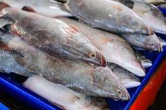 Ψάρια περκών θάλασσας Στοκ Φωτογραφίες