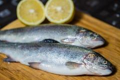 Ψάρια πεστροφών Στοκ εικόνες με δικαίωμα ελεύθερης χρήσης