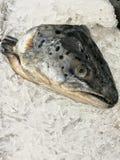 Ψάρια που ακούονται Στοκ Εικόνα