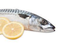 ψάρια που απομονώνονται scomber στοκ εικόνες