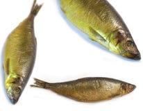 ψάρια που καπνίζονται Στοκ εικόνες με δικαίωμα ελεύθερης χρήσης
