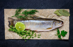 Ψάρια που καρυκεύονται με τα χορτάρια Στοκ Εικόνες