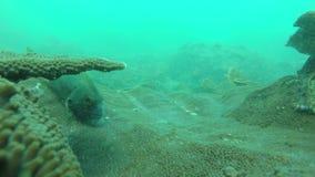 Ψάρια που κολυμπούν σε έναν ωκεανό φιλμ μικρού μήκους