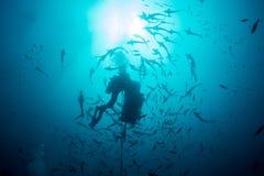 Ψάρια που κολυμπούν κατά τη διάρκεια της τροφής καρχαριών στα Φίτζι Στοκ Εικόνες