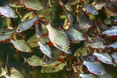 Ψάρια που κολυμπούν σε μια δεξαμενή στοκ φωτογραφίες