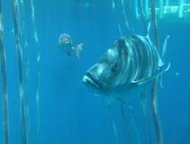 Ψάρια που κολυμπούν στον μπλε ωκεανό Στοκ εικόνα με δικαίωμα ελεύθερης χρήσης