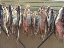 Ψάρια που ξεραίνουν στην κρεμάστρα σε υπαίθριο Αποξηραμένα ψάρια σε ένα σχοινί Στοκ φωτογραφίες με δικαίωμα ελεύθερης χρήσης