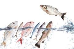 Ψάρια που πέφτουν στο νερό Στοκ φωτογραφίες με δικαίωμα ελεύθερης χρήσης