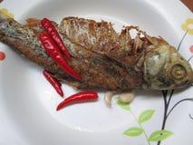 ψάρια που παστώνονται Στοκ φωτογραφία με δικαίωμα ελεύθερης χρήσης