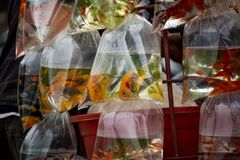 Ψάρια που πωλούνται στην οδό Ανόι Βιετνάμ Στοκ Εικόνες