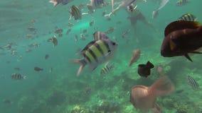 Ψάρια που τρώνε με τα χέρια απόθεμα βίντεο