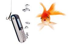 ψάρια που φαίνονται έκπληκ& στοκ εικόνα με δικαίωμα ελεύθερης χρήσης