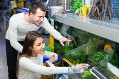 Ψάρια προσοχής ζεύγους στο petshop Στοκ Φωτογραφία