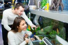 Ψάρια προσοχής ζεύγους στο petshop Στοκ Εικόνες