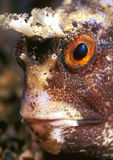 ψάρια προσώπου στοκ εικόνες με δικαίωμα ελεύθερης χρήσης