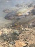 Ψάρια πτώσης νερού στοκ εικόνες