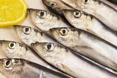 ψάρια - ρέγγες και λεμόνι Στοκ Εικόνα