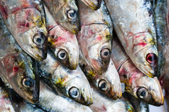 Ψάρια σαρδελλών Στοκ Φωτογραφίες