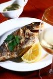 ψάρια σειράς μαθημάτων Στοκ Φωτογραφία