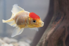 Ψάρια σε ένα ενυδρείο Στοκ Εικόνες
