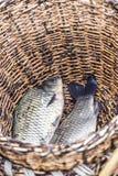 ψάρια σε ένα καλάθι, δύο κομμάτια Στοκ φωτογραφία με δικαίωμα ελεύθερης χρήσης