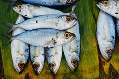 Ψάρια σε ένα φύλλο φοινικών Στοκ Εικόνα