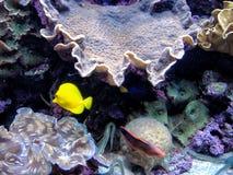 Ψάρια σε μια δεξαμενή στοκ εικόνες