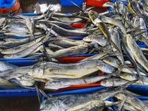 Ψάρια σε Ancon στοκ εικόνα με δικαίωμα ελεύθερης χρήσης