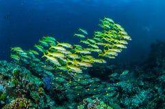 Ψάρια σκοπέλων στοκ φωτογραφία με δικαίωμα ελεύθερης χρήσης