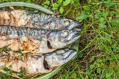 Ψάρια σκουμπριών που μαγειρεύονται σε μια σχάρα σε ένα πιάτο γυαλιού στη χλόη Στοκ εικόνες με δικαίωμα ελεύθερης χρήσης