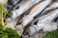 Ψάρια σκουμπριών στον πάγο στην τοπική αγορά Στοκ Εικόνες