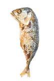 ψάρια σκουμπριών στο άσπρο υπόβαθρο Στοκ Φωτογραφίες