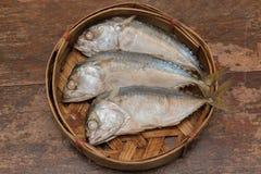 Ψάρια σκουμπριών Στοκ εικόνα με δικαίωμα ελεύθερης χρήσης