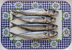 Ψάρια σκουμπριών στοκ εικόνα