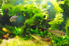 Ψάρια στα άλγη στοκ φωτογραφία με δικαίωμα ελεύθερης χρήσης