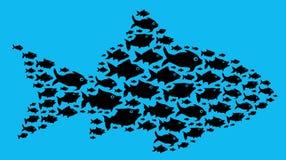 Ψάρια στην έννοια ομάδων Στοκ εικόνα με δικαίωμα ελεύθερης χρήσης