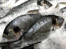 Ψάρια στην αγορά στον πάγο Στοκ φωτογραφίες με δικαίωμα ελεύθερης χρήσης