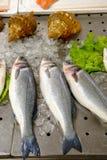 Ψάρια στην αγορά στοκ φωτογραφία με δικαίωμα ελεύθερης χρήσης