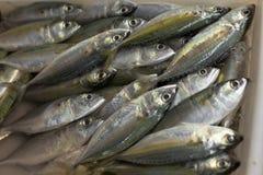 Ψάρια στην αγορά στοκ φωτογραφία