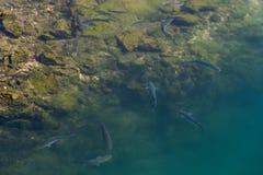Ψάρια στην ακτή Στοκ εικόνα με δικαίωμα ελεύθερης χρήσης