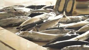 Ψάρια στην ασιατική αγορά φιλμ μικρού μήκους